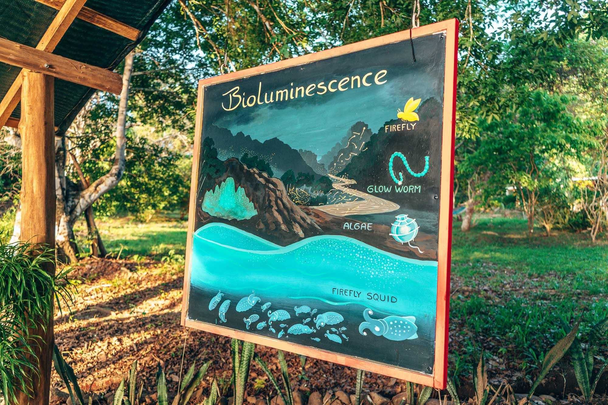 Bioluminescent Bay Paquera Costa Rica Nicoya Peninsula