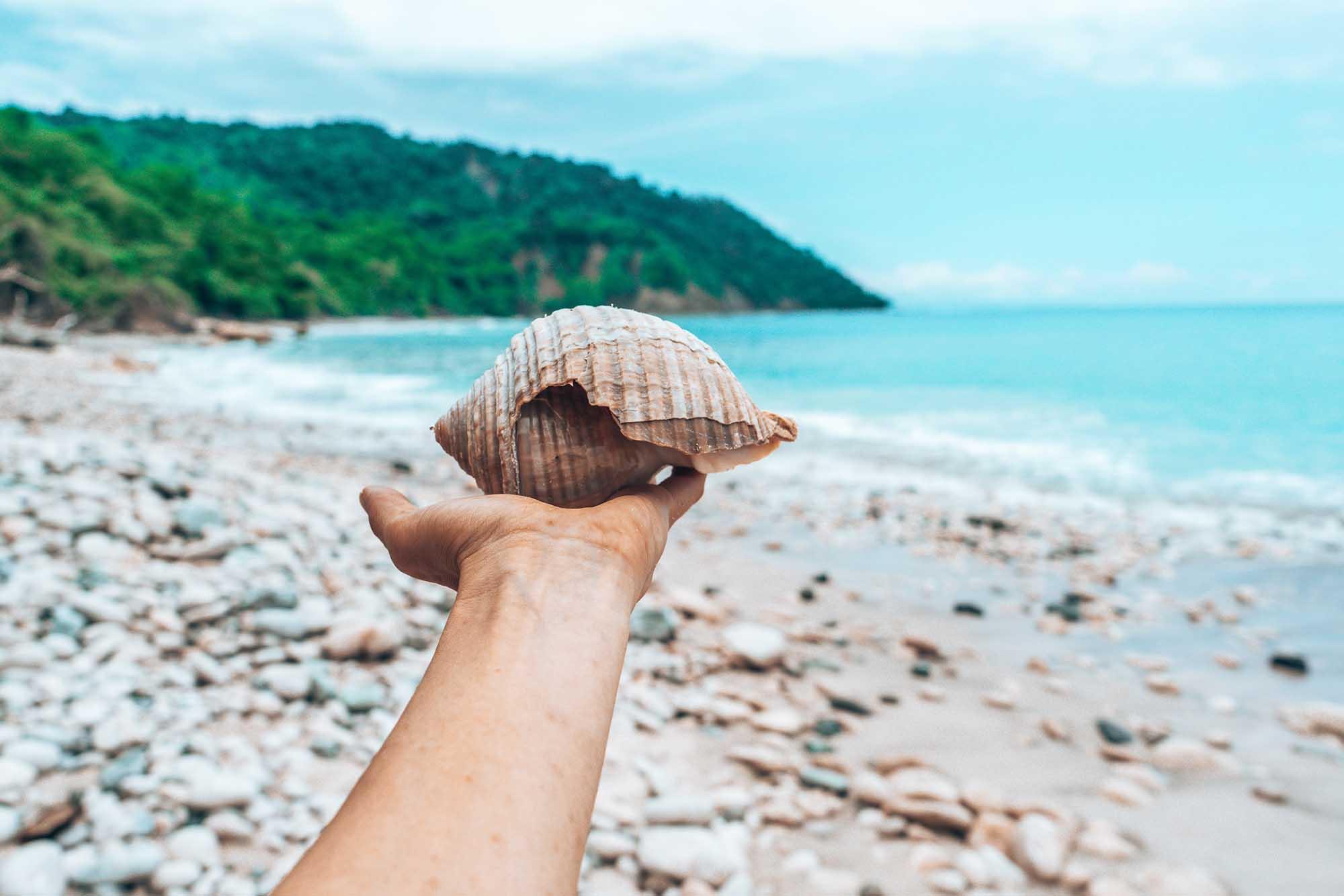 Shell Cabo Blanco Nature Reserve Nicoya Peninsula Costa Rica